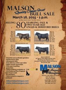 Malson Angus Bull Sale