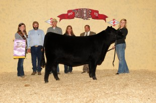 Malsons Jilt 13Z – Owned by Kyla Olson 2013 NILE Reserve Champion